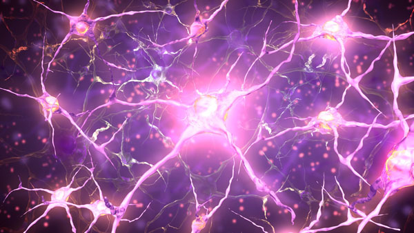 La vie secrète des neurones