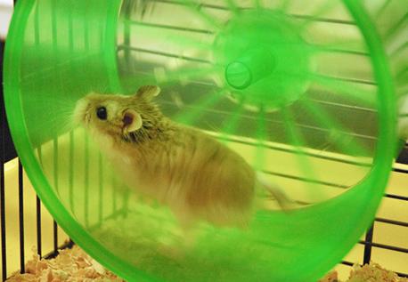 Un hamster énergétique