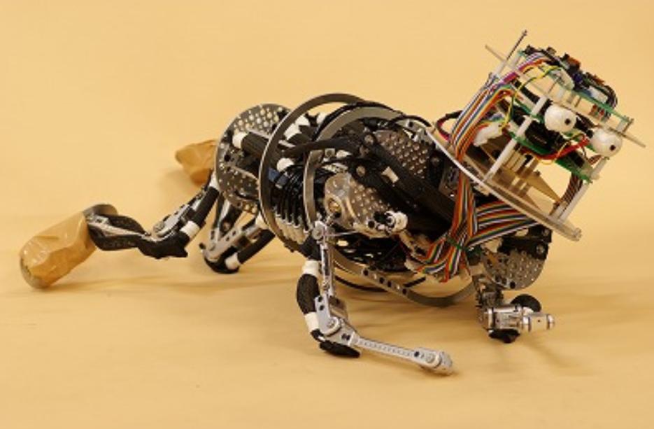 Robotique et biomimétisme : Cherche nounou pour robots