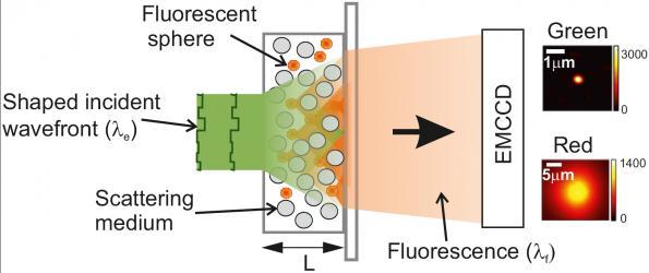 Mesure par microscopie de fluorescence de la densité énergétique d'une lame de matériau dispersif constitué de particules de ZnO.
