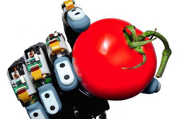 Même une tomate bien mûre ne risque rien entre les doigts Biotac.
