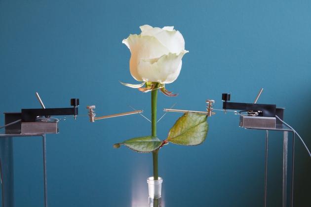 Un polymère infusé dans la fleur réagit électriquement en présence de substances chimiques et provoque des réactions chimiques sous l'effet de signaux électriques.