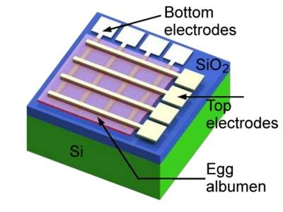 Schéma d'une memristance à base de protéines d'œuf (Image : American Chemical Society).
